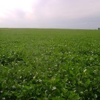 119 has agrícolas sin mejoras, Ramallo
