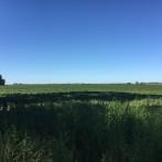 10 has agricolas a 700 mts del asfalto, luz en frente