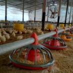 Granja de pollos en Arrecifes para 90.000 aves