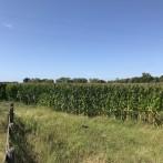 7,5 has agrícolas, excelente ubicación, luz, acceso entoscado Santa Lucía
